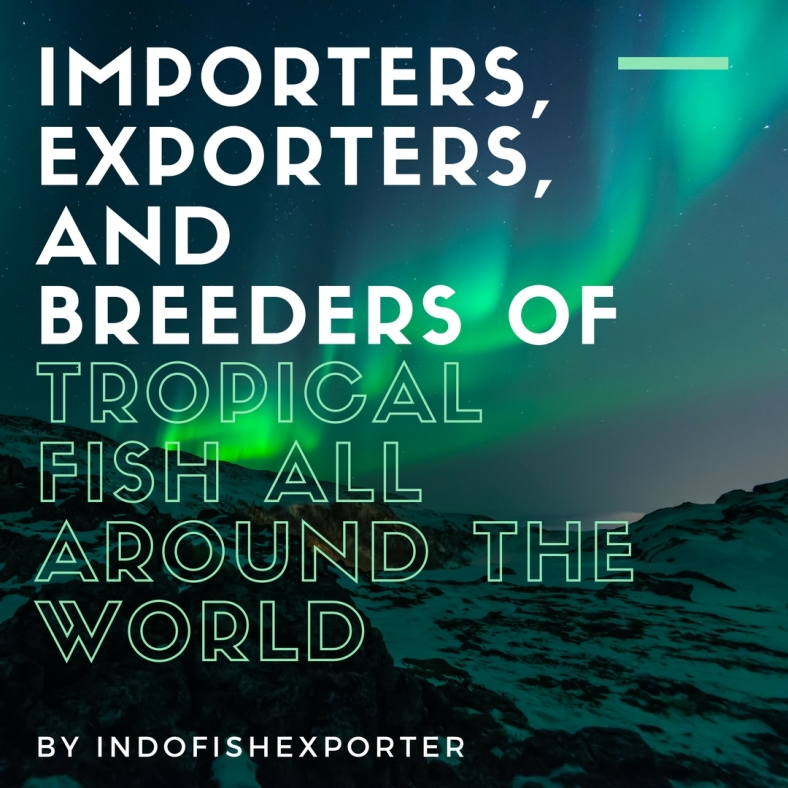 IMPORTERS, EXPORTERS, AND BREEDERS OF TROPICAL FISH ALL AROUND THE