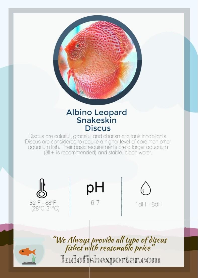 albino-leopard-snakeskin-discus