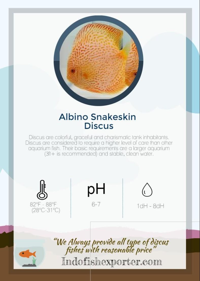 albino-snakeskin-discus