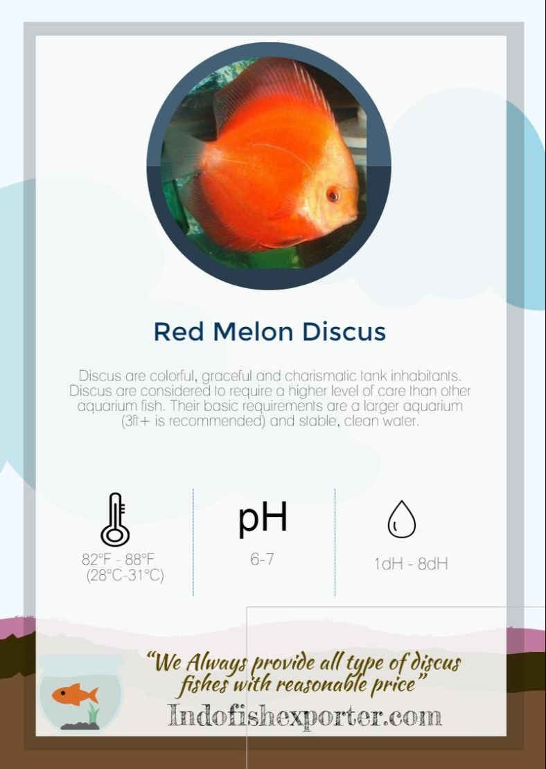 red-melon-discus