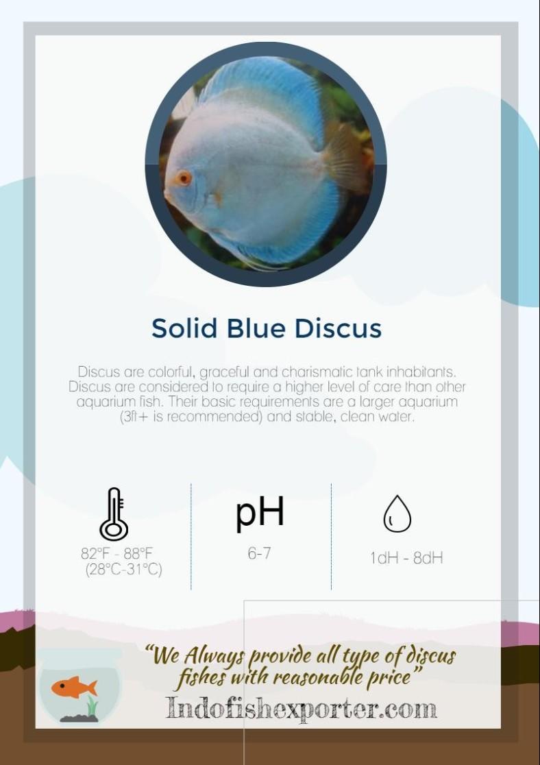 solid-blue-discus