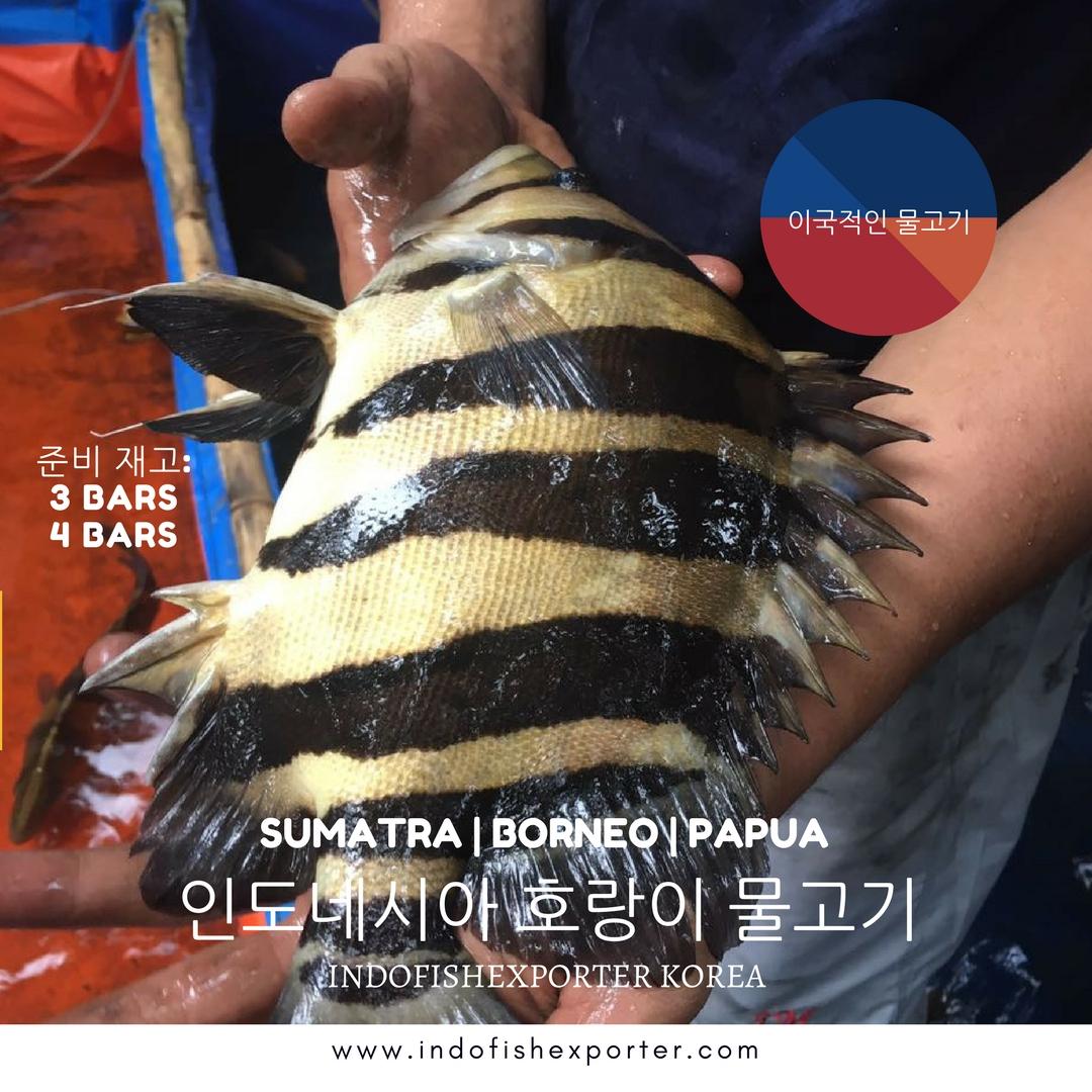 Freshwater aquarium fish exotic - Datz