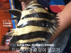 INDOFISHEXPORTER KOREA