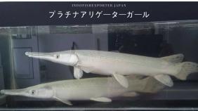 spatula platinum japan