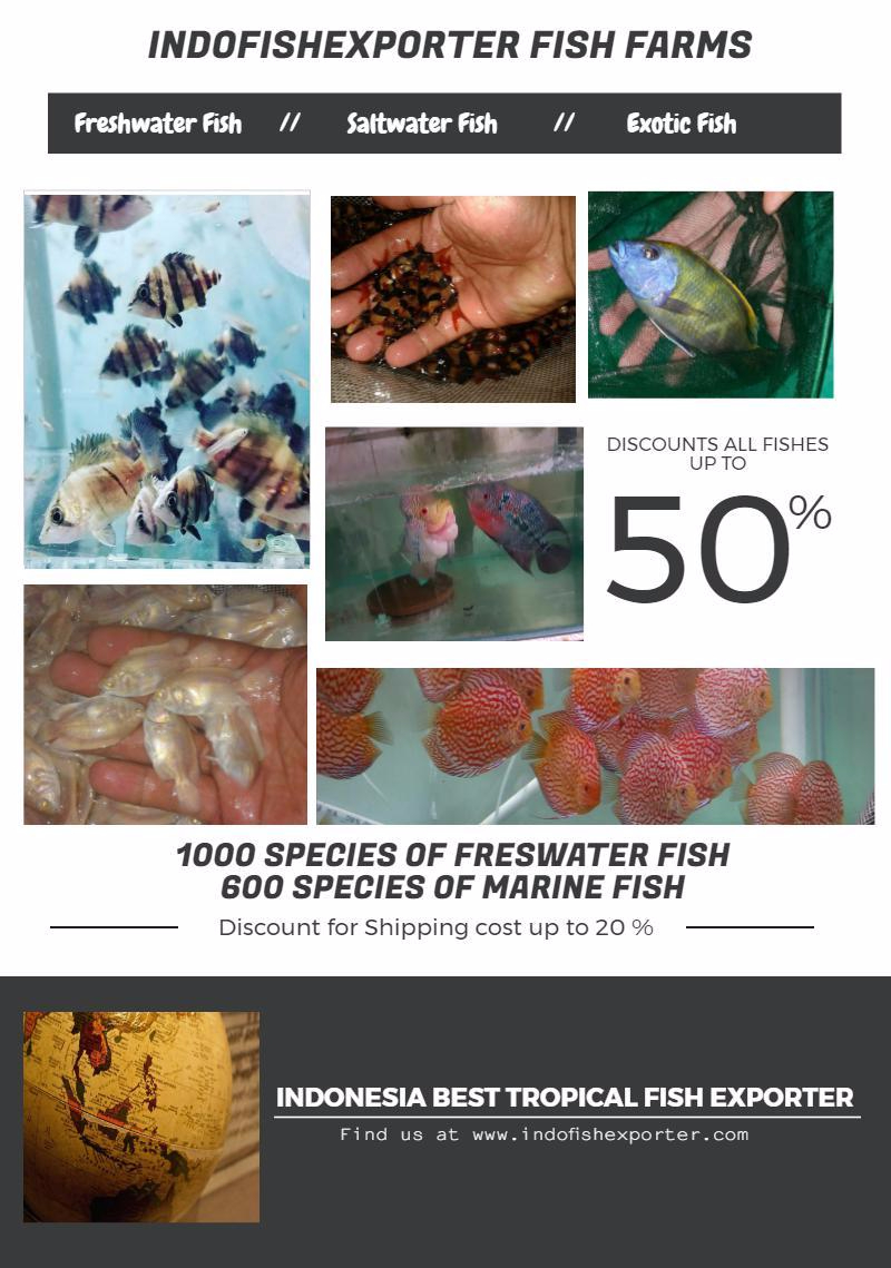 Freshwater aquarium fish exporters - Indofishexporter Fish Farms