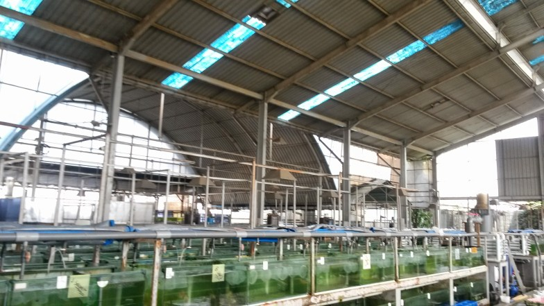 Indonesia Marine Fish Facilities