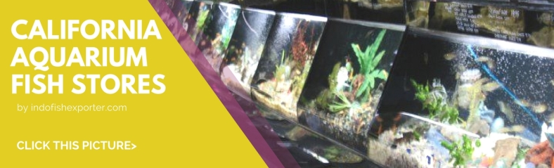California | WHOLESALE INDONESIA TROPICAL FISH / AQUARIUM