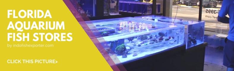 Florida | WHOLESALE INDONESIA TROPICAL FISH / AQUARIUM FISH / RARE