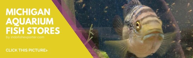 Michigan | WHOLESALE INDONESIA TROPICAL FISH / AQUARIUM FISH / RARE