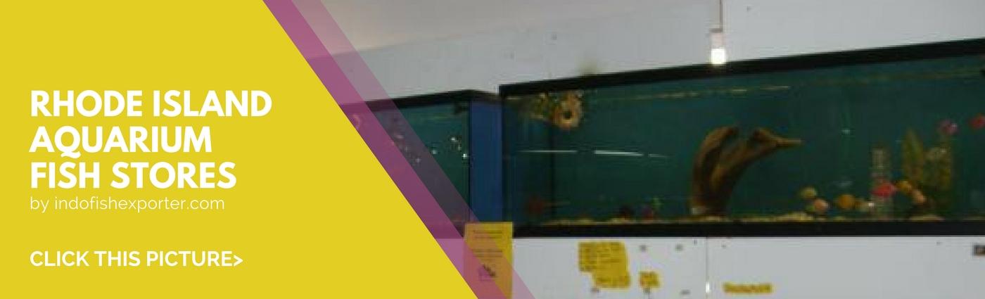 Rhode Island Wholesale Indonesia Tropical Fish Aquarium Fish Rare Exotic Fish Exporter