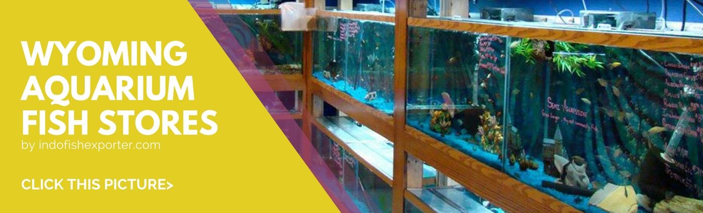 Usa Wholesale Indonesia Tropical Fish Aquarium Fish Rare Exotic Fish Exporter