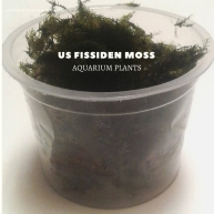 us fissiden moss plants, aquarium plants, live aquarium plants