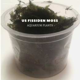 us fissiden moss plants, aquarium plants, live aquarium plants