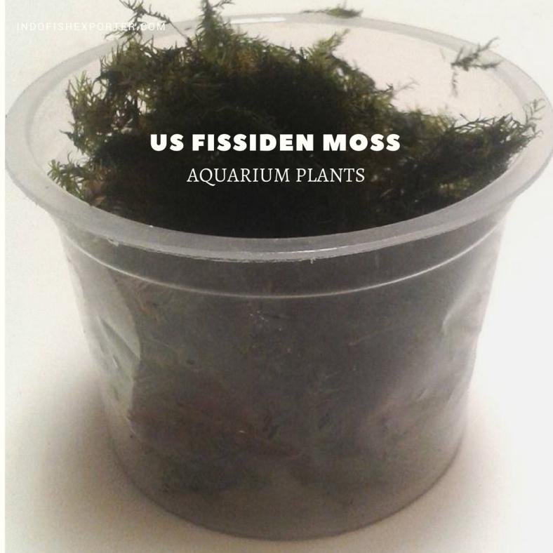 us fissiden moss plants