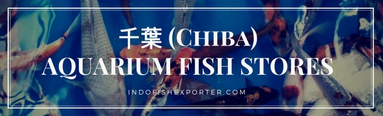 Chiba Perfecture, Chiba Fish Stores, Chiba Japan