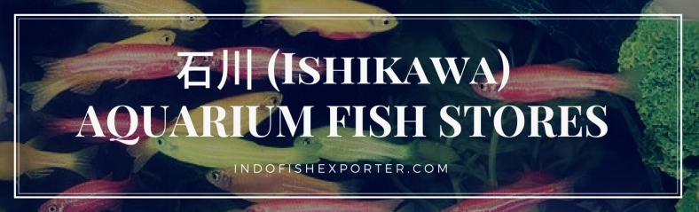 Ishikawa Perfecture, Ishikawa Fish Stores, Ishikawa Japan