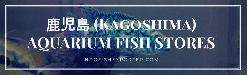 Kagoshima Perfecture, Kagoshima Fish Stores, Kagoshima Japan