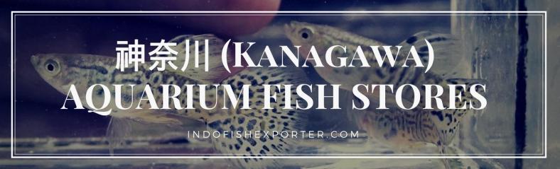 Kanagawa Perfecture, Kanagawa Fish Stores, Kanagawa Japan