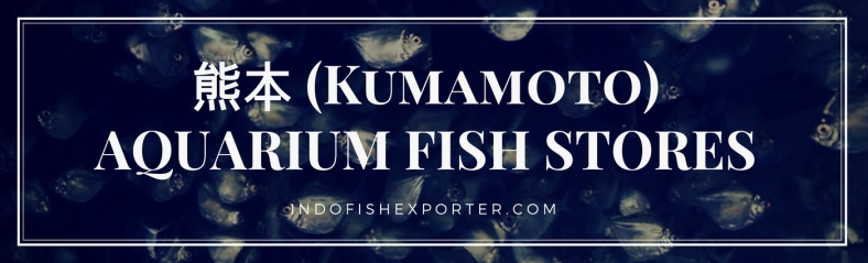 Kumamoto Perfecture, Kumamoto Fish Stores, Kumamoto Japan