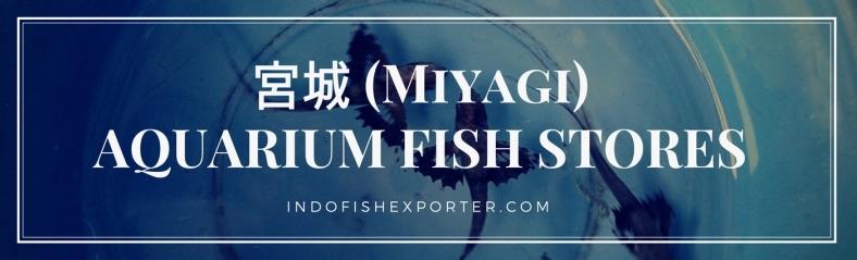Miyagi Perfecture, Miyagi Fish Stores, Miyagi Japan