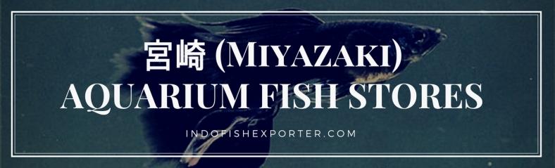 Miyazaki Perfecture, Miyazaki Fish Stores, Miyazaki Japan