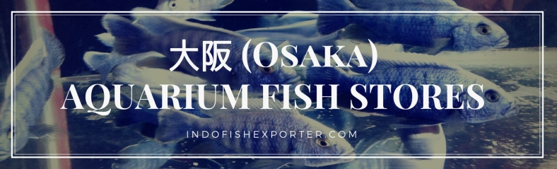 Osaka Perfecture, Osaka Fish Stores, Osaka Japan