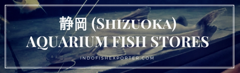 Shizuoka Perfecture, Shizuoka Fish Stores, Shizuoka Japan