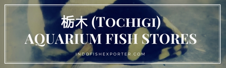 Tochigi Perfecture, Tochigi Fish Stores, Tochigi Japan