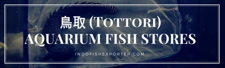 Tottori Perfecture, Tottori Fish Stores, Tottori Japan