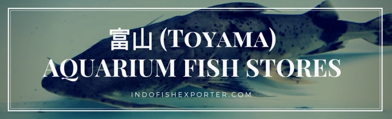 Toyama Perfecture, Toyama Fish Stores, Toyama Japan