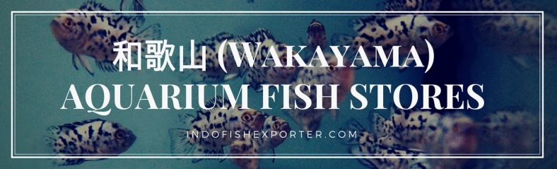Wakayama Perfecture, Wakayama Fish Stores, Wakayama Japan