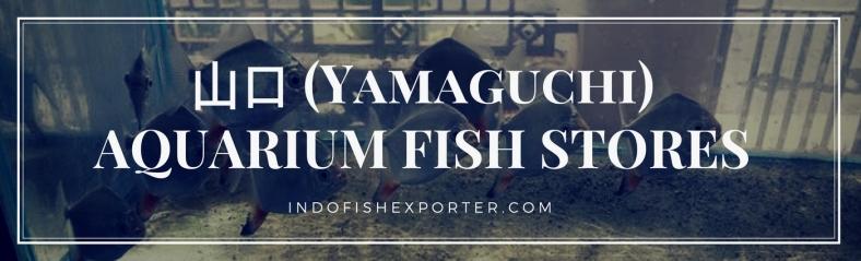 Yamaguchi Perfecture, Yamaguchi Fish Stores, Yamaguchi Japan